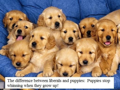 lots-of-cute-puppies-1-1024x7681.jpg?w=6