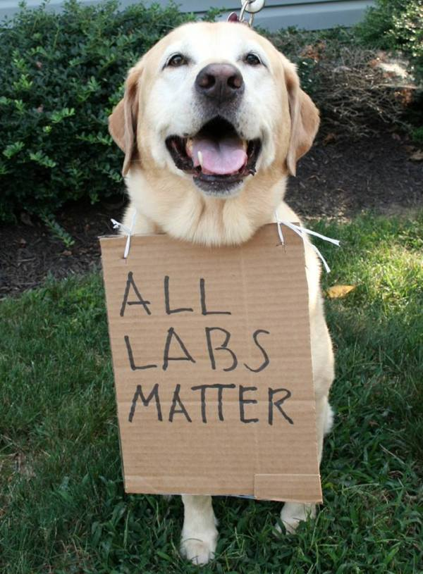 all labs